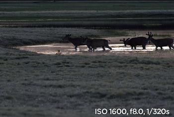샘플사진 ISO 1600, f8.0, 1/320s